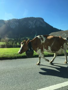 Heavy traffic in the Swiss Alps!