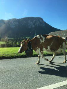 Heavy traffic in the Swiss Alps!