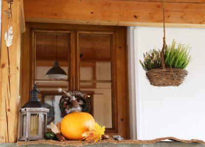 Autumn decoration at the entrance